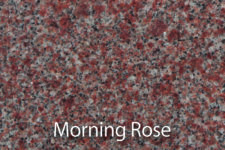 _0007_MorningRose